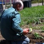 POTAGER - Plants & Plantation