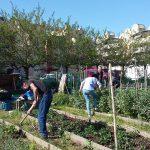 Le jardin potager des usagers